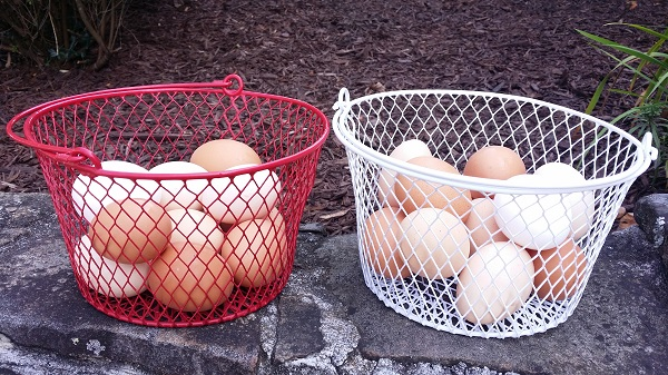 fresh range free cage free chicken eggs