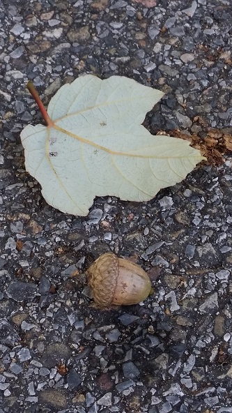 leaf and nut