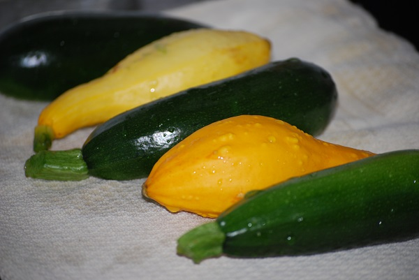 zucchini and crooked necks squash