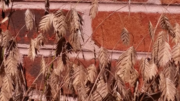 plant seeds and red brick mortor